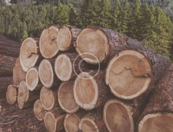 Forestry and Timber